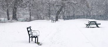 Bello paesaggio di inverno con gli alberi innevati Banchi in a Immagini Stock