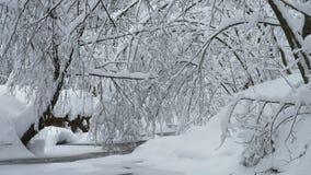 Bello paesaggio di inverno con gli alberi innevati ed il fiume congelato della foresta video d archivio