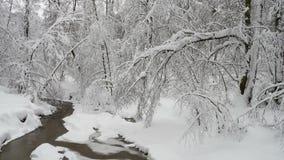 Bello paesaggio di inverno con gli alberi innevati ed il fiume congelato della foresta stock footage