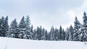 Bello paesaggio di inverno con gli alberi innevati Montagne di inverno archivi video
