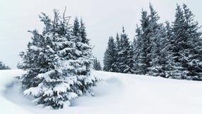 Bello paesaggio di inverno con gli alberi innevati Montagne di inverno video d archivio