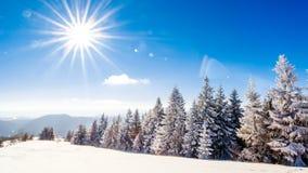 Bello paesaggio di inverno con gli alberi innevati Montagne di inverno stock footage