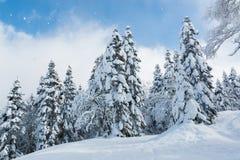 Bello paesaggio di inverno con gli alberi innevati, precipitazioni nevose Fotografia Stock
