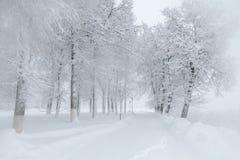 Bello paesaggio di inverno durante la tempesta della neve Fotografie Stock