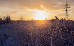 Bello paesaggio di inverno, in un campo con erba alta innevata immagini stock libere da diritti