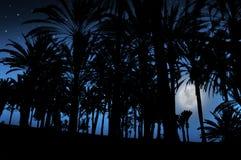 Bello paesaggio di notte con le palme e la luna Fotografia Stock