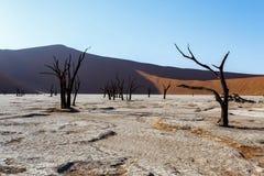Bello paesaggio di Sossusvlei di Death Valley, Namibia Fotografia Stock