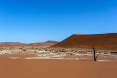 Bello paesaggio di Sossusvlei di Death Valley, Namibia Immagini Stock Libere da Diritti