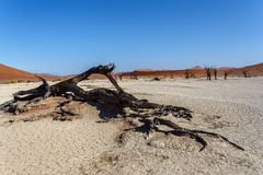 Bello paesaggio di Sossusvlei di Death Valley, Namibia Immagini Stock