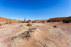 Bello paesaggio di Sossusvlei di Death Valley, Namibia Immagine Stock