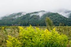 Bello paesaggio di spirito giapponese dell'alta montagna di mattina Fotografia Stock Libera da Diritti