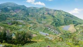 Bello paesaggio di terreno coltivabile in Dieng Immagine Stock Libera da Diritti