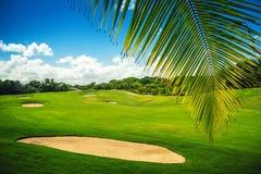 Bello paesaggio di una corte di golf con le palme in latta di Punta Immagine Stock Libera da Diritti