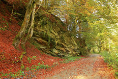Bello paesaggio dorato di autunno Immagine Stock Libera da Diritti
