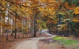Bello paesaggio dorato di autunno Fotografia Stock