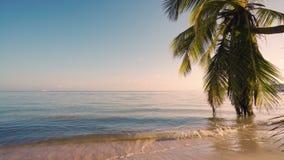 Bello paesaggio esotico della spiaggia ad alba, feste tropicali sul mare video d archivio