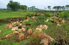 Bello paesaggio indiano del terreno coltivabile a Warje Immagine Stock