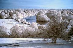 Bello paesaggio infrarosso unico sbalorditivo con colore falso Fotografie Stock