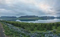 Bello paesaggio islandese con il campo nella priorità alta e nelle montagne ed i fiordi nei precedenti Immagine Stock