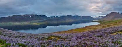 Bello paesaggio islandese con il campo nella priorità alta e nelle montagne ed i fiordi nei precedenti Fotografie Stock