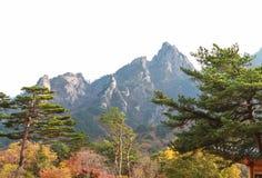 Bello paesaggio nella stagione di autunno Immagini Stock