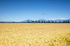 Bello paesaggio nella zona del sud della Nuova Zelanda Fotografia Stock Libera da Diritti
