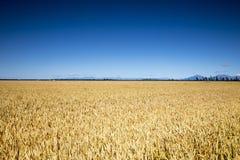 Bello paesaggio nella zona del sud della Nuova Zelanda Immagine Stock