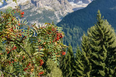 Bello paesaggio nelle alpi italiane Immagini Stock