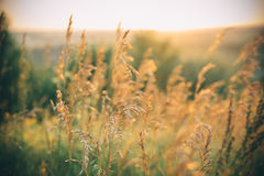 Bello paesaggio rurale Fotografia Stock