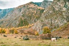 Bello paesaggio rurale Immagine Stock Libera da Diritti