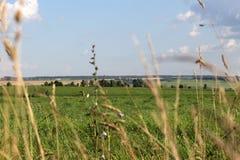 Bello paesaggio rurale con i prati verdi e cielo blu attraverso l'erba Immagine Stock Libera da Diritti