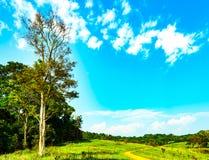 Bello paesaggio rurale del campo di erba verde con i fiori bianchi su cielo blu e sui cumuli bianchi il giorno del sole Foresta Fotografia Stock
