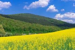 Bello paesaggio rurale della molla con il giacimento giallo del seme di ravizzone nella priorità alta e nel treno rosso dietro Fotografia Stock
