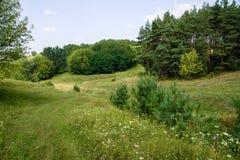 Bello paesaggio rurale di estate Immagine Stock Libera da Diritti