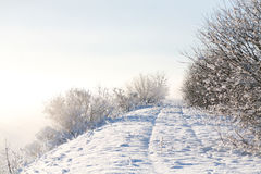 Bello paesaggio scintillante pastello di inverno ad alba su una mattina fredda con gli alberi coperti in brina Immagine Stock