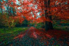 Bello paesaggio soleggiato della foresta con un albero ed ombre sul prato inglese un giorno di autunno Immagini Stock