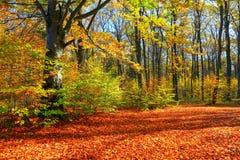 Bello paesaggio soleggiato della foresta con un albero ed ombre sul prato inglese un giorno di autunno Fotografie Stock Libere da Diritti
