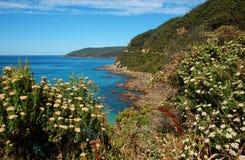 Bello paesaggio sulla grande strada dell'oceano, Australia. Immagini Stock Libere da Diritti
