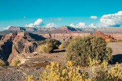 Bello paesaggio variopinto del Grand Canyon con il cespuglio su theforeground fotografia stock