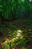 Bello paesaggio verde Fotografia Stock Libera da Diritti