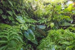 Bello paesaggio verde Immagine Stock