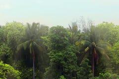 Bello paesaggio verde Immagini Stock