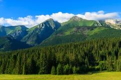 Bello paesaggio verde di estate delle montagne di Tatra nel villaggio di Zdiar, Slovacchia Fotografie Stock