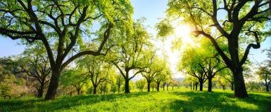 Bello paesaggio verde panoramico con gli alberi in una fila immagini stock libere da diritti