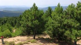 Bello panorama dei pini sulla cima della montagna video d archivio