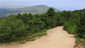 Bello panorama dei pini sulla cima della montagna archivi video