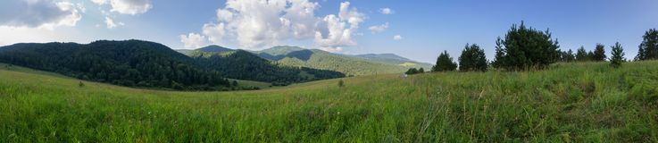 Bello panorama di estate di vegetazione fertile in montagne di Altai Immagine Stock