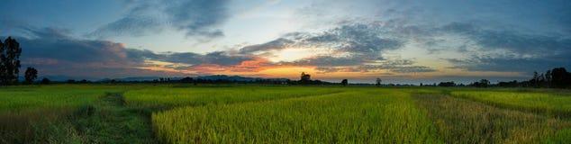 Bello panorama di tramonto di alba delle risaie della Tailandia del paesaggio della risaia Fotografie Stock Libere da Diritti