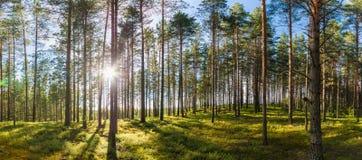 Bello panorama verde della foresta Paesaggio di ESTATE Immagini Stock