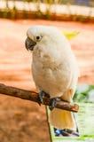 Bello pappagallo immagini stock